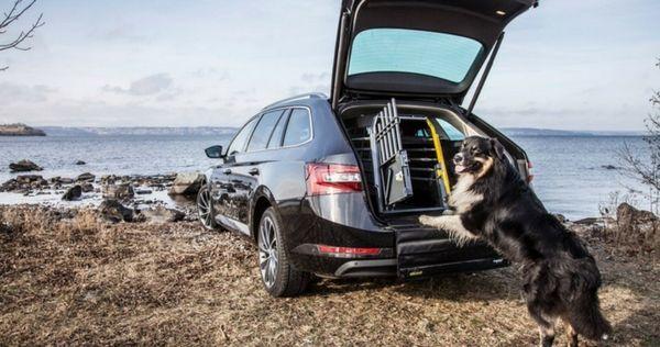 Köp en krocksäker hundbur till bilen